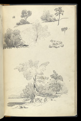 Miscellaneous pencil drawings, mainly studies of trees. 44